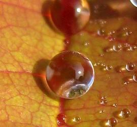 Herfstdruppel